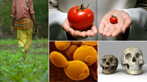 ¿Cómo alimentar al mundo en el futuro? 5 ideas para superar el desafío