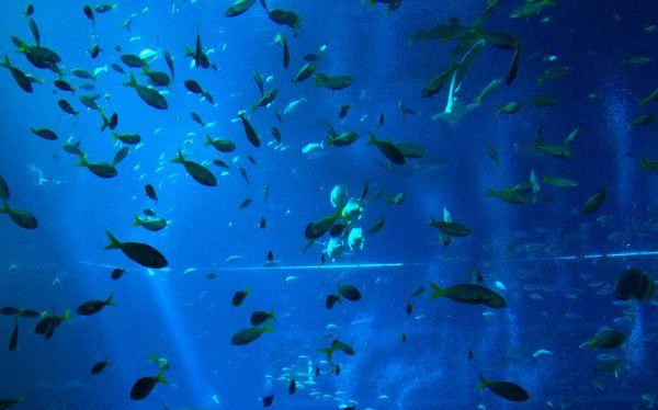 Las especies marinas migran hacia los polos por el cambio climático