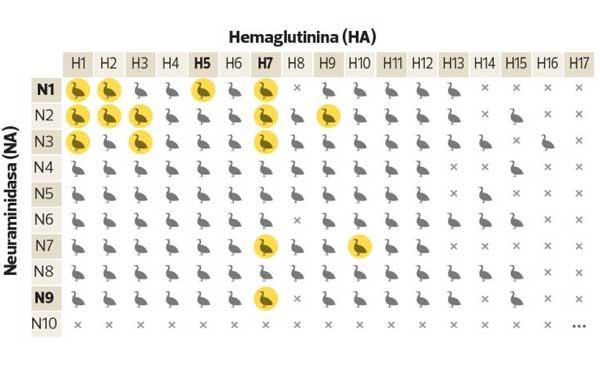 ¿Qué significa el nombre de la gripe AH1N1?
