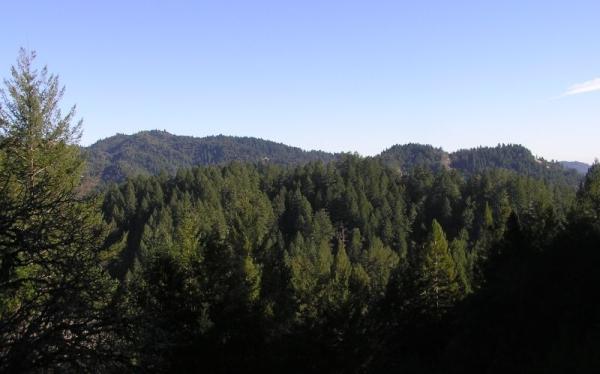 Los árboles más grandes del mundo pueden ayudar a combatir el cambio climático