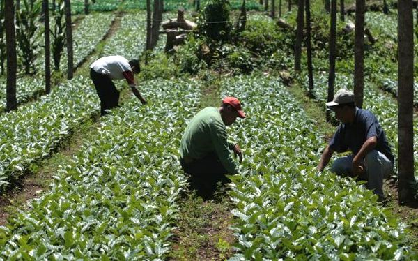 Ministro de Agricultura afirma que paro de cafetaleros es por intereses electorales