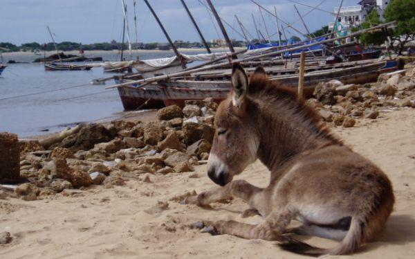 El caso de los burros que toman vacaciones en Kenia