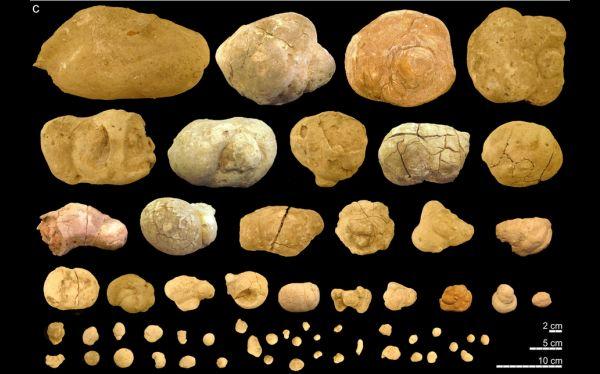 letrina más antigua del mundo fue hallada en Argentina