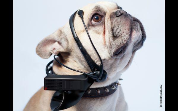 """Científicos desarrollan un """"traductor de perros al inglés"""""""
